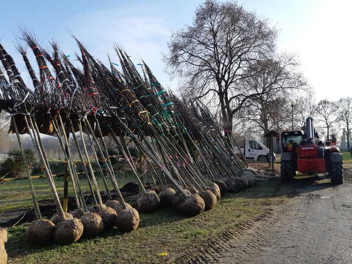 450 alberi dalla Metropolitana di Torino